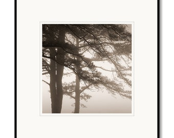 Pine trees in fog, Blue Ridge Parkway, Virginia, photography, black and white, sepia warm tone, framed photo by Adrian Davis, limited art
