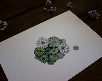 Cactus A4 Archival Print