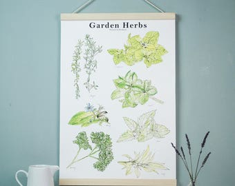 Illustrated Botanical Guide to Garden Herbs Watercolour Art Print