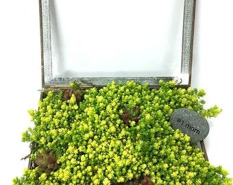 Sedum Treasure Box Terrarium