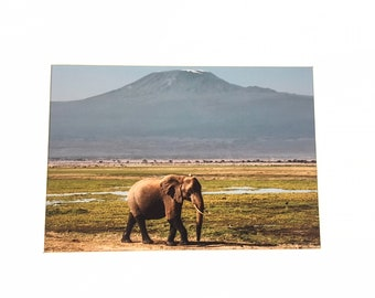 African Elephant beneath Mt Kilamanjaro - A4 Photo Mounted/Framed