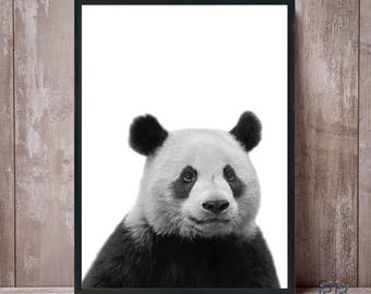 Panda Print, Panda Black and White, Panda Wall Art, Panda Bear Print, Animal Wall Art, Panda Photo, Panda Poster, Printable Panda, Kids Room