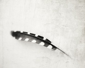 "Black white feather print gray white black minimal wall art  monochrome photograph naturalist wall art  ""Plume"""