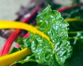 Organic Rainbow Swiss Chard Blend Heirloom Vegetable Seeds