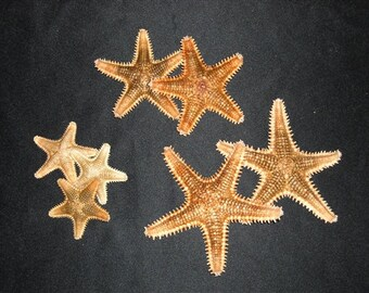 5-Pcs Saw Starfish, Craft Shells, Seashells, Starfish, Coastal Decor, Beach Decor, Beach Themed Party Decor