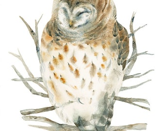 Barred Owl Watercolor painting - Print Reproduction