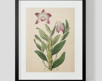 Botanical Print Plate 1314