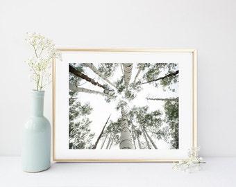 Tree Wall Art, Printable Art, Tree Print, Minimalist Print, Black And White Photo, Home decor, Wall Decor, Instant download