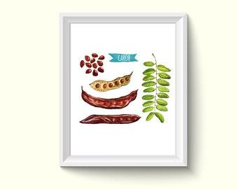 Carob Seeds Watercolor Painting Poster Art Print P268