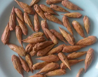 Balm of Gilead Buds, Balm of Gilead, Cottonwood Buds, Poplar Buds, 0.5oz, 1oz, 4oz, Dried Herbs for Salves Balms, Herbal Supplement, Resins