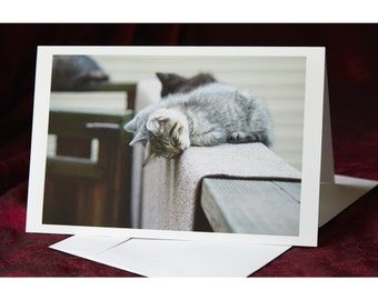 Nap Time - kittens - Folded Greeting Card