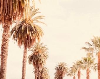 Palm tree Photo Print