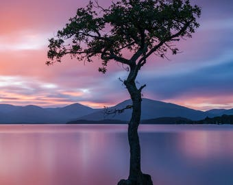 The Lone Tree, Milarrochy Bay, Loch Lomond, Scotland