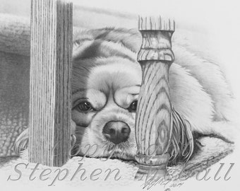 Cocker Spaniel Giclee fine art print of pencil drawing, cocker spaniel drawing, dog portrait, dog painting, pet portrait, dog art