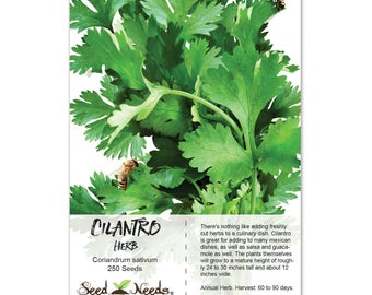 Cilantro Herb Seeds (Coriandrum sativum) Non-GMO Seeds by Seed Needs