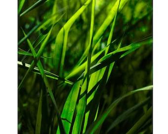 Grass Photography, Summer Photography, Relaxing Art, Geen Wall Art, Calming Art, Fine Art Photography, 8x8, 10x10, 12x12 art print
