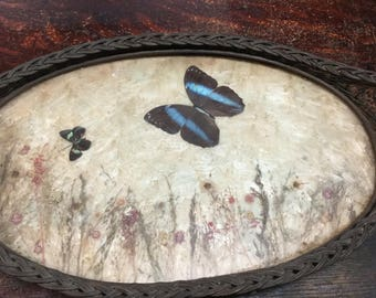 Old Butterfly Tray