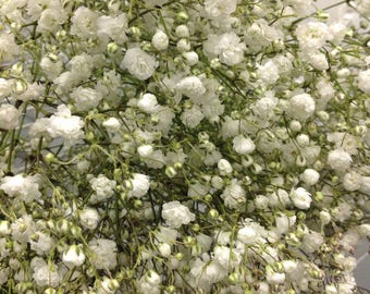 FRESH Baby's Breath, Gypsophila, Gyp, Fresh Flowers, Wedding Flowers, White Flowers, Baby's Breath Wreath, Bulk fresh flowers, bulk flowers