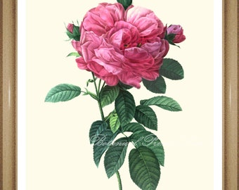 """Roses Pictures. Rose Print No.15. Flower Pictures. Floral Art. 5x7"""", 8x10"""" 11x14"""""""