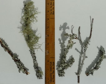 Lot of 5 Small Mossy Branches, Terrarium decoration