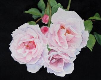 pink roses watercolor-roses painting-rose art-flower watercolor-flower painting-fine art print-botanical art-botanical painting-garden art