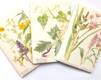 Blank notebooks, unlined journals, travel journal, garden journal, bullet journal, Country Diary of an Edwardian Lady