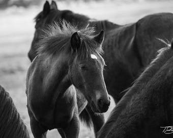 Baby Horse Photograph