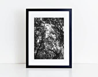 Trees - Physical fine art photography print, black and white print, minimal, tree, decorative, dark, noir, summer, abstract poster