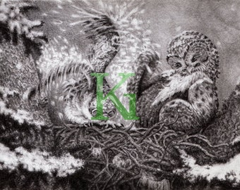 "KG Cards ""Owlet"" Greeting Card"