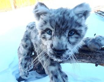 Baby Irbis- snow leopard