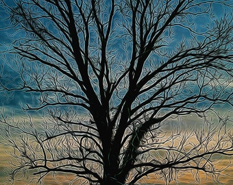 Tree, Silhouette, Winter, Sunset,