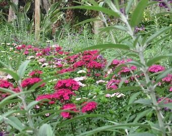 florida wild flowers