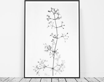 Black and White Photography, Scandinavian Print, Flower Print, Flower Photography, Affiche Scandinave, Flower Art, Macro Photography
