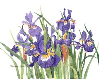 Wild Iris Watercolor Painting Reproduction by Wanda's Watercolors