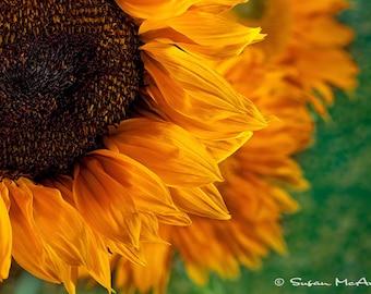 Tournesol Photo d'Art, Photo de fleur, photographie de la Nature, photographie nature morte, jaune, Orange, vert, brun, Photo Art mural, décoration d'intérieur