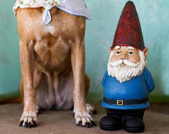 hound + Gnome