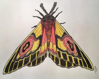 Triangular Moth Print