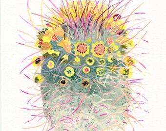 Barrel Cactus- Archival Print