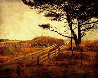 Dreamy nature photo print, rustic landscape, Norwegian pine, travel photography