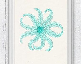 Hairy starfish in green aqua color - Decorative art Giclee Print wall decor  wall art print- sea life print -Marine SAS082
