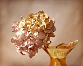 Hydrangea Photograph Fine Art Photograph Flower photo