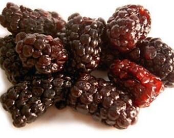 30 BLACKBERRY BARS, Sugar Free,Why Weight, Gluten Free, Vegan, Diet Bars, Acai Berry, Brindle Berry,