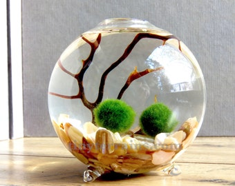 Mother's Day Gift Terrarium - Personalized Marimo Moss Ball Single Globe Terrarium, 23 Colors, Gift Wrap, Gift Message/Card, Fast Shipping