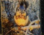 """Magnet Douglas Squirrel - 1.75"""" x 1.75"""""""