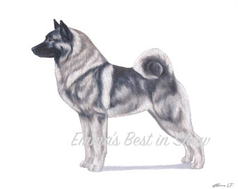 Norwegian Elkhound Dog - Archival Fine Art Print - AKC Best in Show Champion - Breed Standard - Hound Group - Original Art Print
