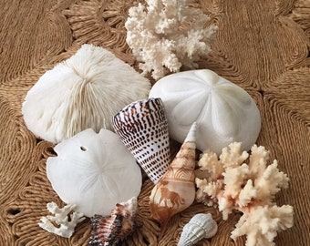 Seashell Collection Sea Shell Collectible Beach Decor Coral Sea Biscuit Carved Seashell Murex Shell Slipper Coral Beach
