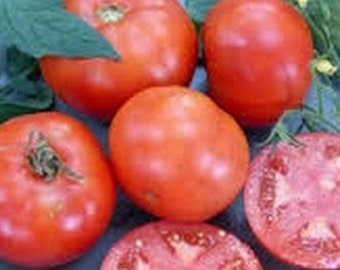 Mountain Princess Heirloom Tomato Seeds - 30 seeds - Non GMO