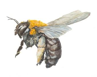Carpenter Bee Fine Art Giclee Achival Print from original watercolor painting artist Joy Neasley