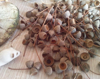 150 acorn caps for crafts real oak tree hat tops fall wedding ideas table scatter decorations rustic creations crafts