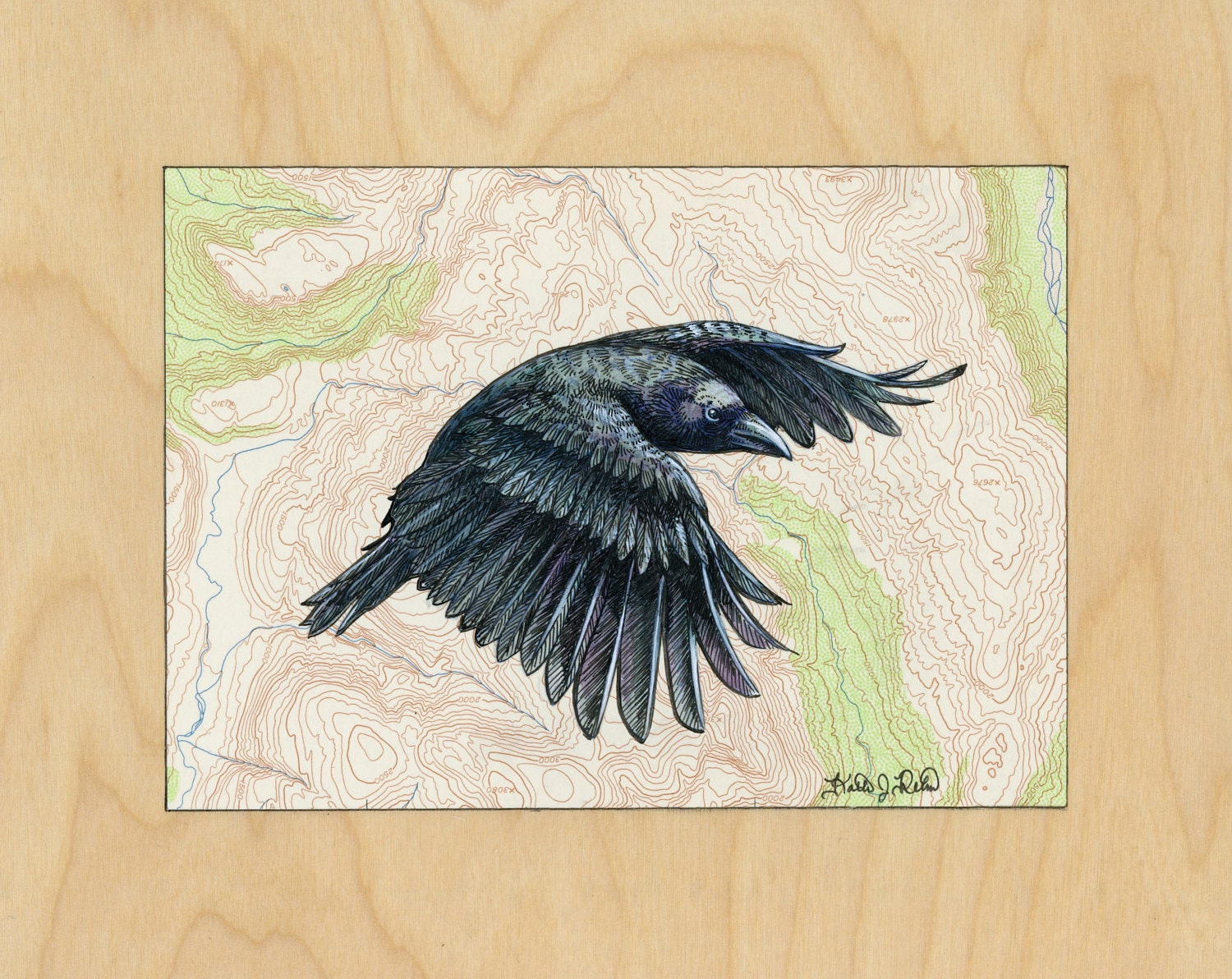 Flying Crow art on topography map Archival print wildlife